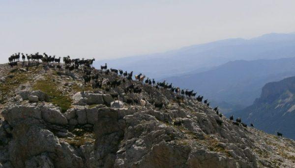 Trekking en el Pirineo con guía de montaña